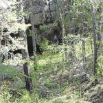 La comarca impulsa la micología como arma contra la despoblación.
